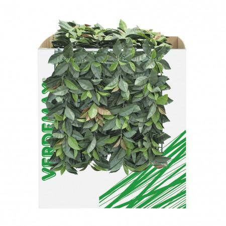 Siepe verdecor tipo photinia 50x50cm Verdemax