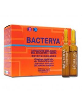 Attivatore di azoto Bacterya Equo 12 fiale da 5 ml