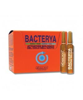 Attivatore di azoto Bacterya Equo 24 fiale da 5 ml