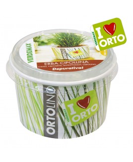 Ortolino Erba cipollina vaso Verdemax V002023
