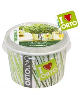 Ortolino Origano vaso Verdemax V002026