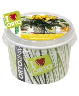 Ortolino Peperoncino giallo vaso Verdemax V002029