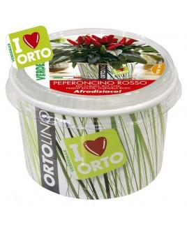 Ortolino Peperoncino rosso vaso Verdemax V002030