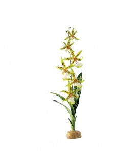 Pianta artificiale Rainforest plants Spider Orchid con base Exo Terra Askoll